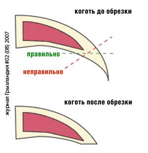 http://hedgehog-home.my1.ru/_fr/1/08500655.jpg